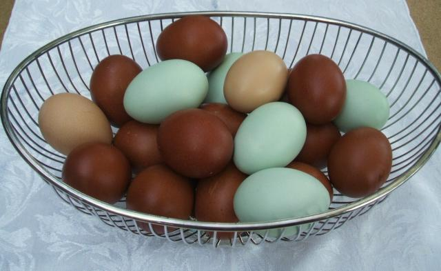 With Easter Egger Eggs
