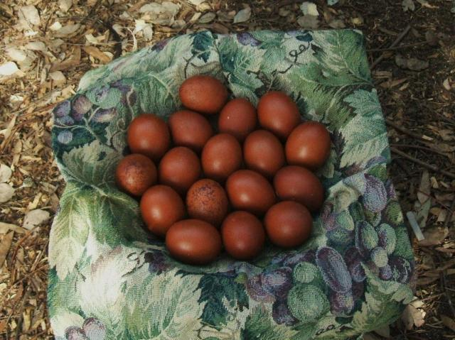 March Eggs 2010