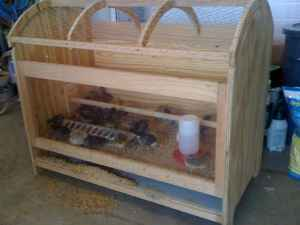 Chick crib brooder idea Craigslist nashville tn farm and garden