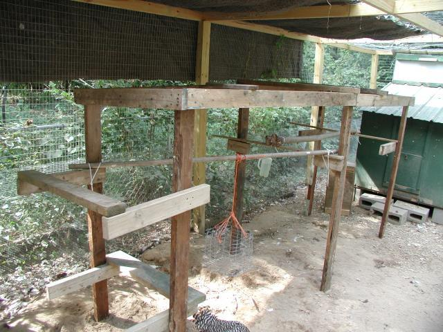 http://www.backyardchickens.com/forum/uploads/13250_f_chicken_jungle_gym.jpg