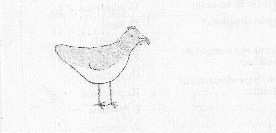 13494_chicken_drawing.jpg