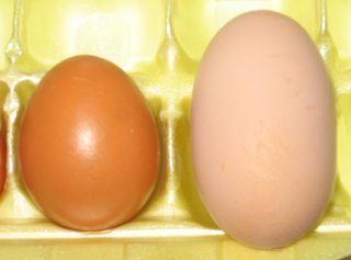 two egg colors