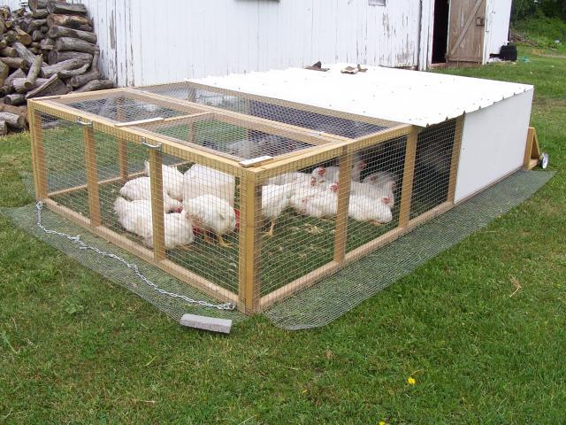 How much room would 25 meat birds need for Big chicken tractor