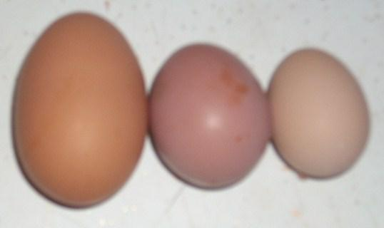 http://www.backyardchickens.com/forum/uploads/16520_3eggs.jpg