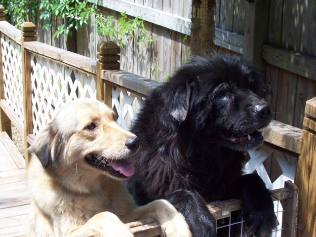 http://www.backyardchickens.com/forum/uploads/16662_cocoa_and_sable