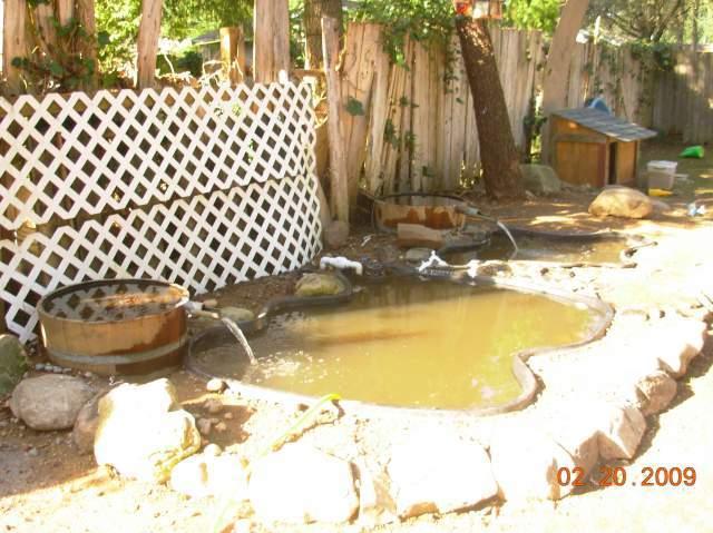 Clean Ducks Ponds Chicken Coops Cheap Ducks Ducks