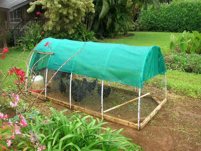 Looking for plans for a chicken tractor backyard chickens for Cheap chicken tractor