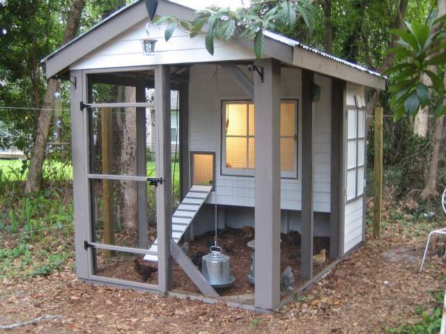 Backyard Chickens Coop :  chickens can roam This is where the chickens started taking over our