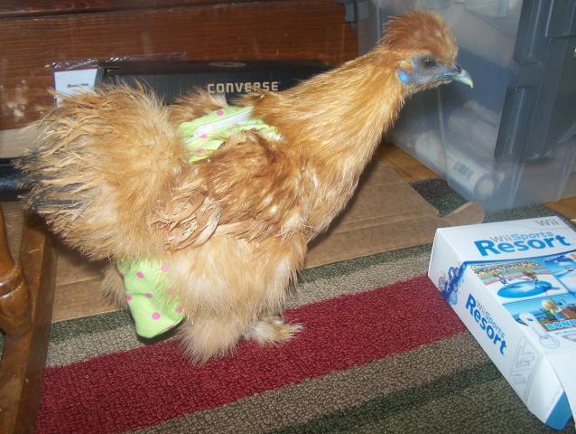 http://www.backyardchickens.com/forum/uploads/17603_181.jpg