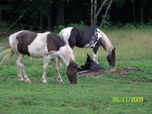 17983_dirtyhorses.jpg