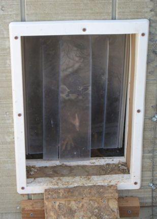 Electric Fence And Chicken Door Coop Update Backyard