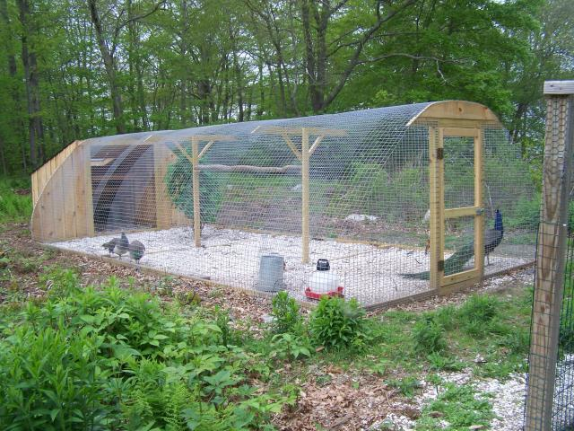 Pictures of your peacocks pens page 3 for Chicken enclosure ideas