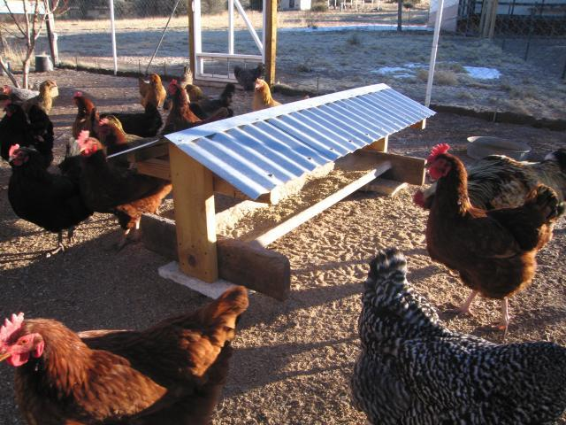 outdoor feeder