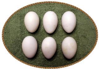 Appenzell Bearded Hen