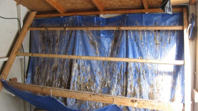 Poop Board Vs Poop Hammock Page 2 Backyard Chickens