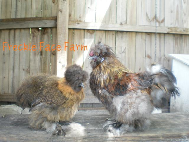 http://www.backyardchickens.com/forum/uploads/20413_p8120940a.jpg