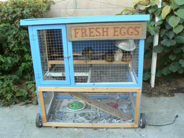 Anyone use a converted rabbit hutch backyard chickens for Easy diy rabbit cage budget