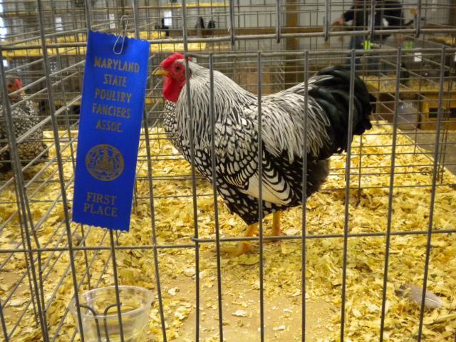 http://www.backyardchickens.com/forum/uploads/20866_dscn0348.jpg