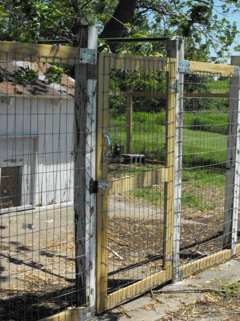 http://www.backyardchickens.com/forum/uploads/20922_dscf0031.jpg