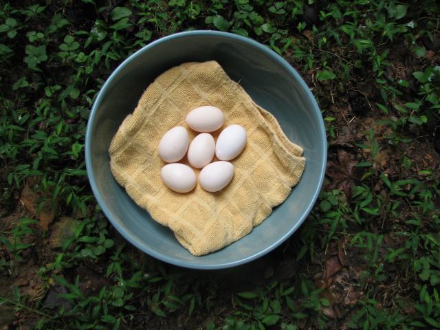 21925_eggs-_first_ones_004.jpg