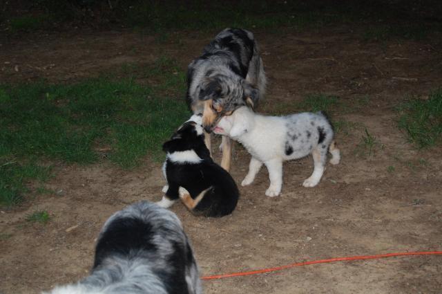 http://www.backyardchickens.com/forum/uploads/21968_dsc_0081.jpg