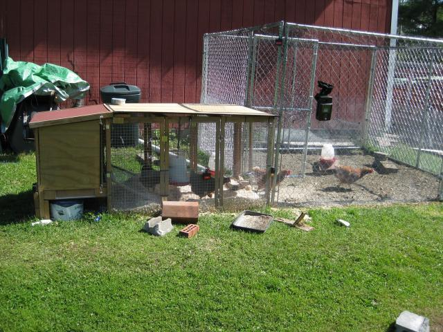 http://www.backyardchickens.com/forum/uploads/22059_img_0538.jpg