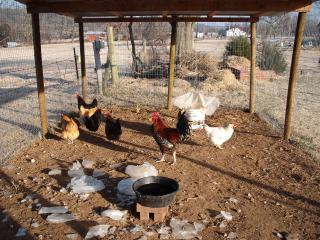 http://www.backyardchickens.com/forum/uploads/22249_8deg.jpg