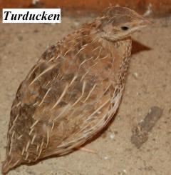 22319_quail4.jpg