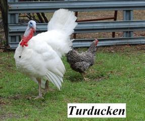 22319_turkey2.jpg