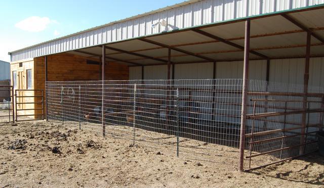 Daisychick S New Chicken Coop Backyard Chickens Community