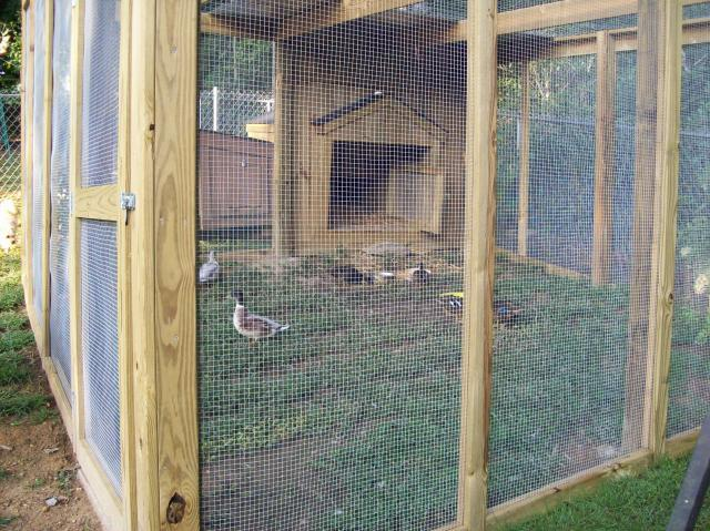 http://www.backyardchickens.com/forum/uploads/22826_100_0707.jpg