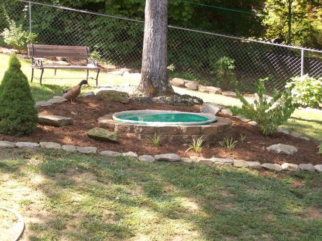 Duck pond ideas on pinterest duck pond ducks and ponds for Homemade pond ideas