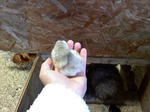 23177_chick_2.jpg