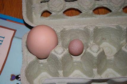 24697_eggs1.jpg