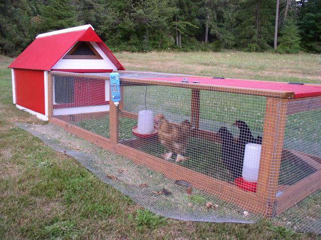 Building a dog proof chicken run coop look for Chicken tractor building plans