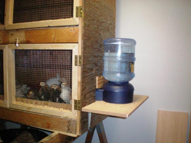 http://www.backyardchickens.com/forum/uploads/25270_8_brooder.jpg