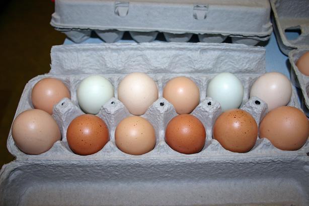 25346_eggs.jpg