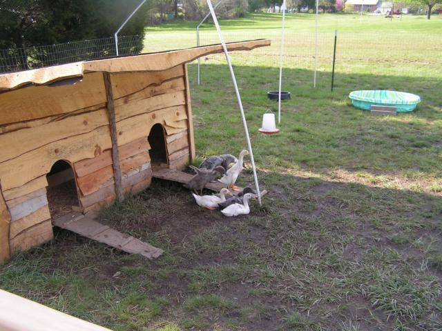 http://www.backyardchickens.com/forum/uploads/25894_pict0043.jpg
