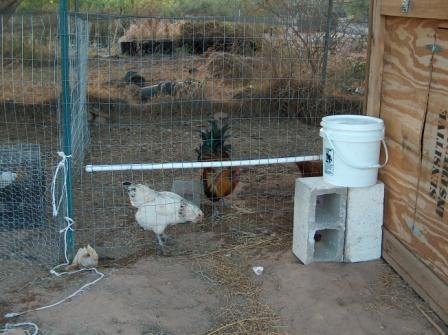 Chicken Waterer1