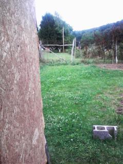 http://www.backyardchickens.com/forum/uploads/26911_072109_132400.jpg