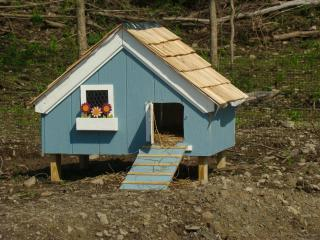 Small duck house backyard chickens for Building a duck house shelter