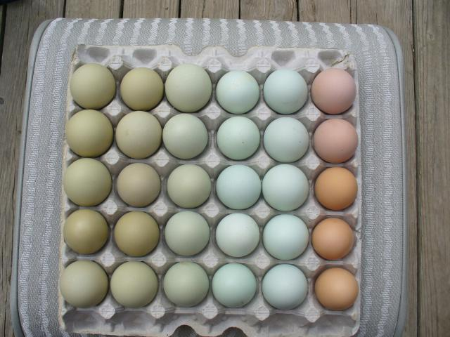 Easter Egg Layers...Multi-colored birds and eggs.