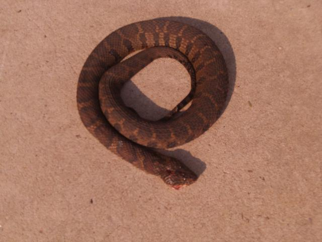 28493_2011_snakes_013.jpg