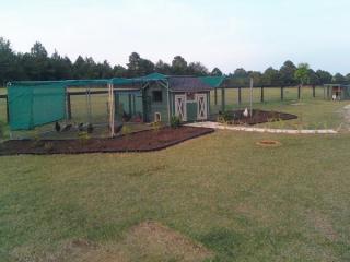 Rhode island house backyard chickens community - Western mass craigslist farm and garden ...