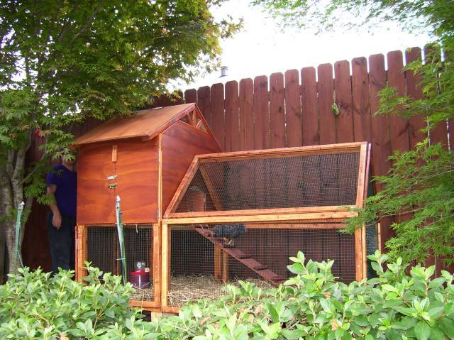Suburban Backyard Chickens : Jennys Small Suburban Coop  BackYard Chickens Community