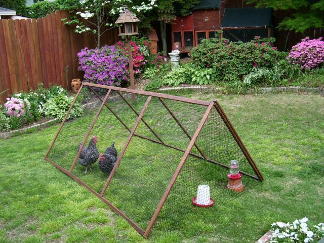 httpwwwbackyardchickenscomforumuploads28681_chickens_range_rover