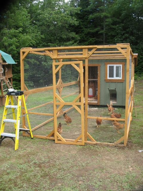 how to build a chicken shed australia