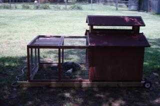 29869_goats_chickens_032.jpg