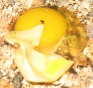 2_eggbound-1.jpg