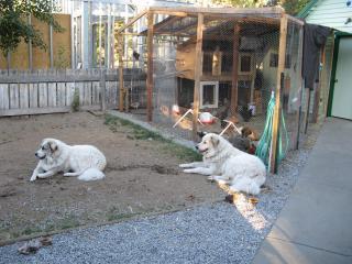 http://www.backyardchickens.com/forum/uploads/30313_img_0007.jpg